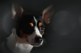 Heart of a Dog Profile Image